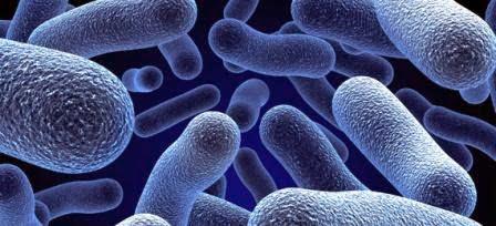 ¿Qué es la microbiología?