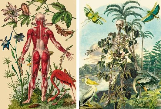¿Qué es ciencias naturales?