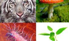 El origen de la teoría celular